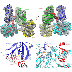 Read more at: A structure-based understanding of how the Integrated Stress Response is switched off