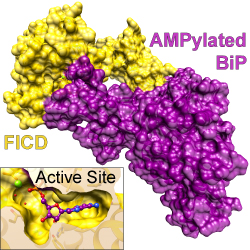 Read more at: Structural and mechanistic insights into a molecular chaperone
